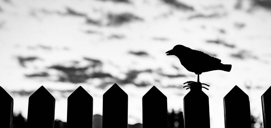 silhouette of bird on fence on focus photo
